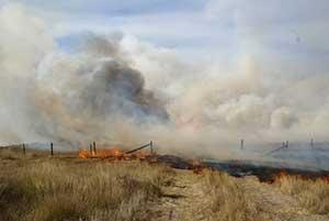 raging-grassfire